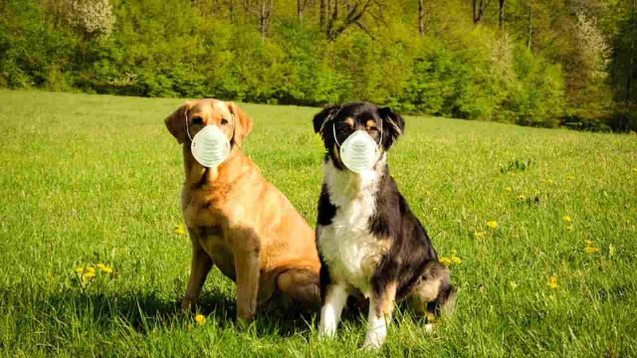 Covid-19 e cani